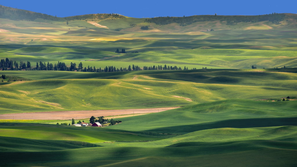 The Palouse wheat farm fields near Palouse, Colfax, Pullman and Spokane, WA. in Eastern Washington
